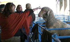 Dutchess County Sheep & Wool Festival   Kids Out and About